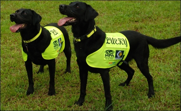 DVD sniffer dogs Lucky and Flo.